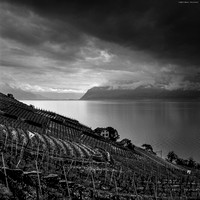 Lavaux Wineyards II