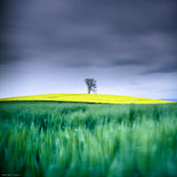 Yellow Hill on Green Grass II
