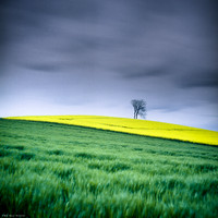 Yellow Hill on Green Grass I
