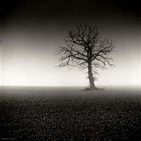 Dead Foggy Tree III