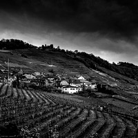 Lavaux Wineyards I